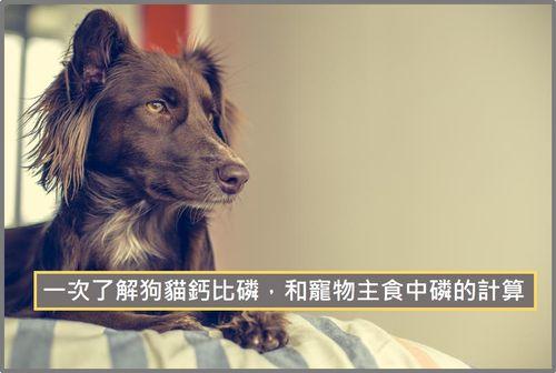 狗貓鈣比磷,和寵物主食中磷的計算