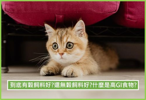 貓 有穀飼料 無穀飼料