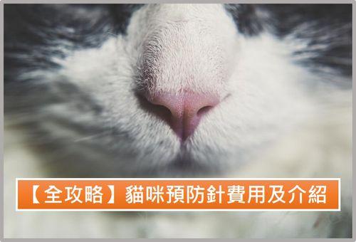 貓咪預防針費用