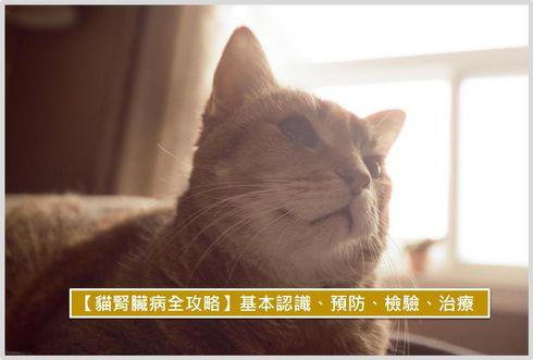 貓腎臟病全攻略,認識、預防、檢驗、治療