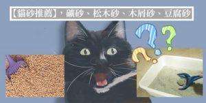 貓砂推薦封面